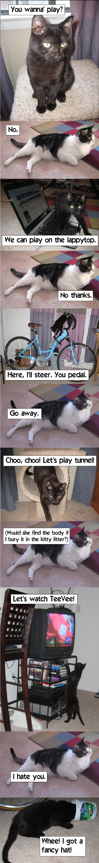 Cats - a saga