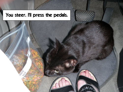 I'll press the pedals. You steer!